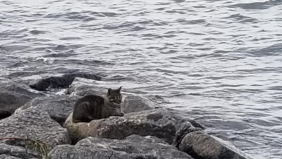 海岸のネコ②